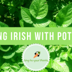 Part 2: Feeling Irish with Potatoes