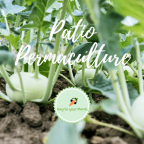 Patio Permaculture